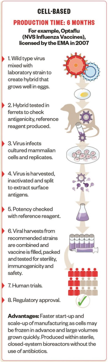 Cell-based Vaccines